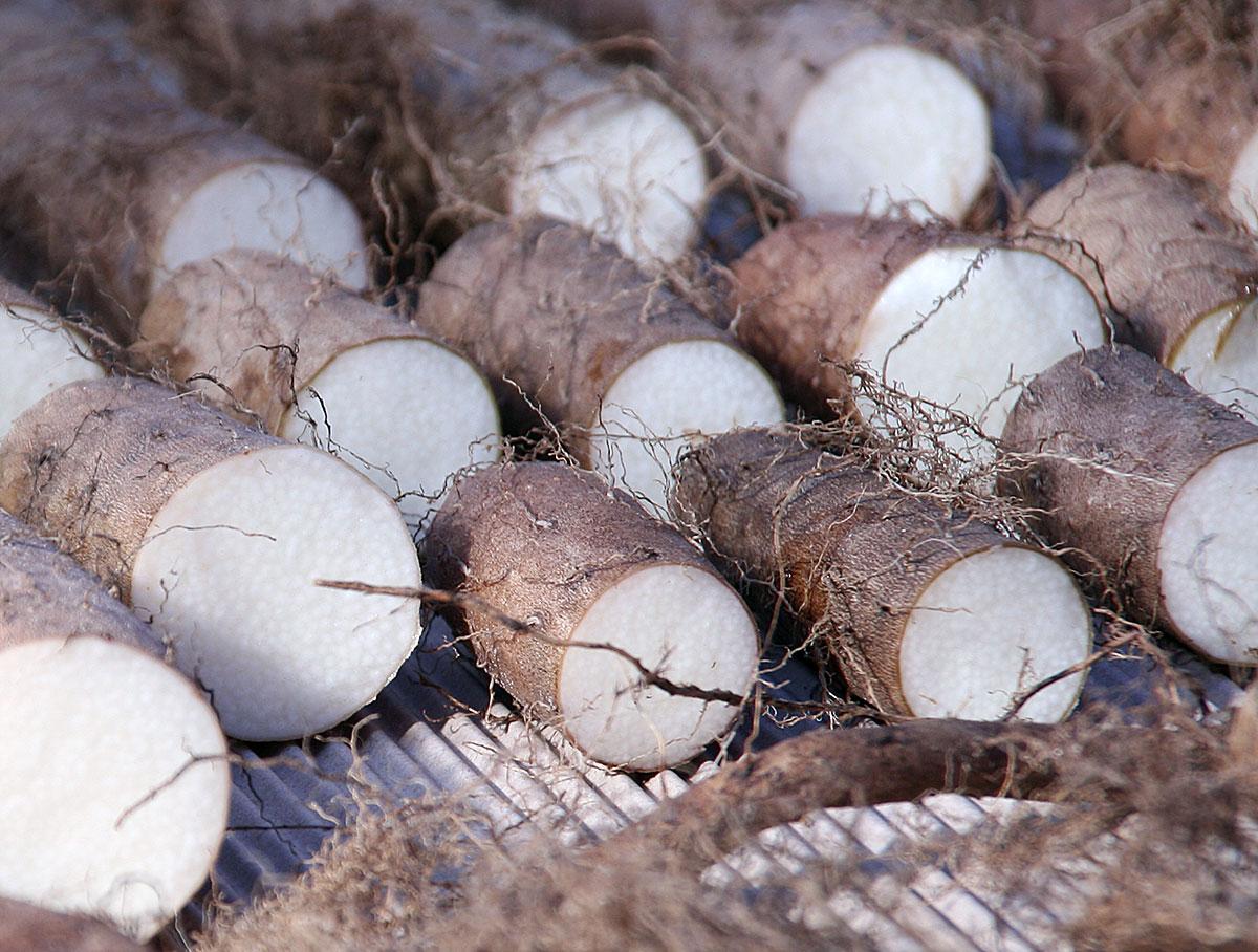 Dioscorea batatas angeschnitten mit weißer Schnittfläche